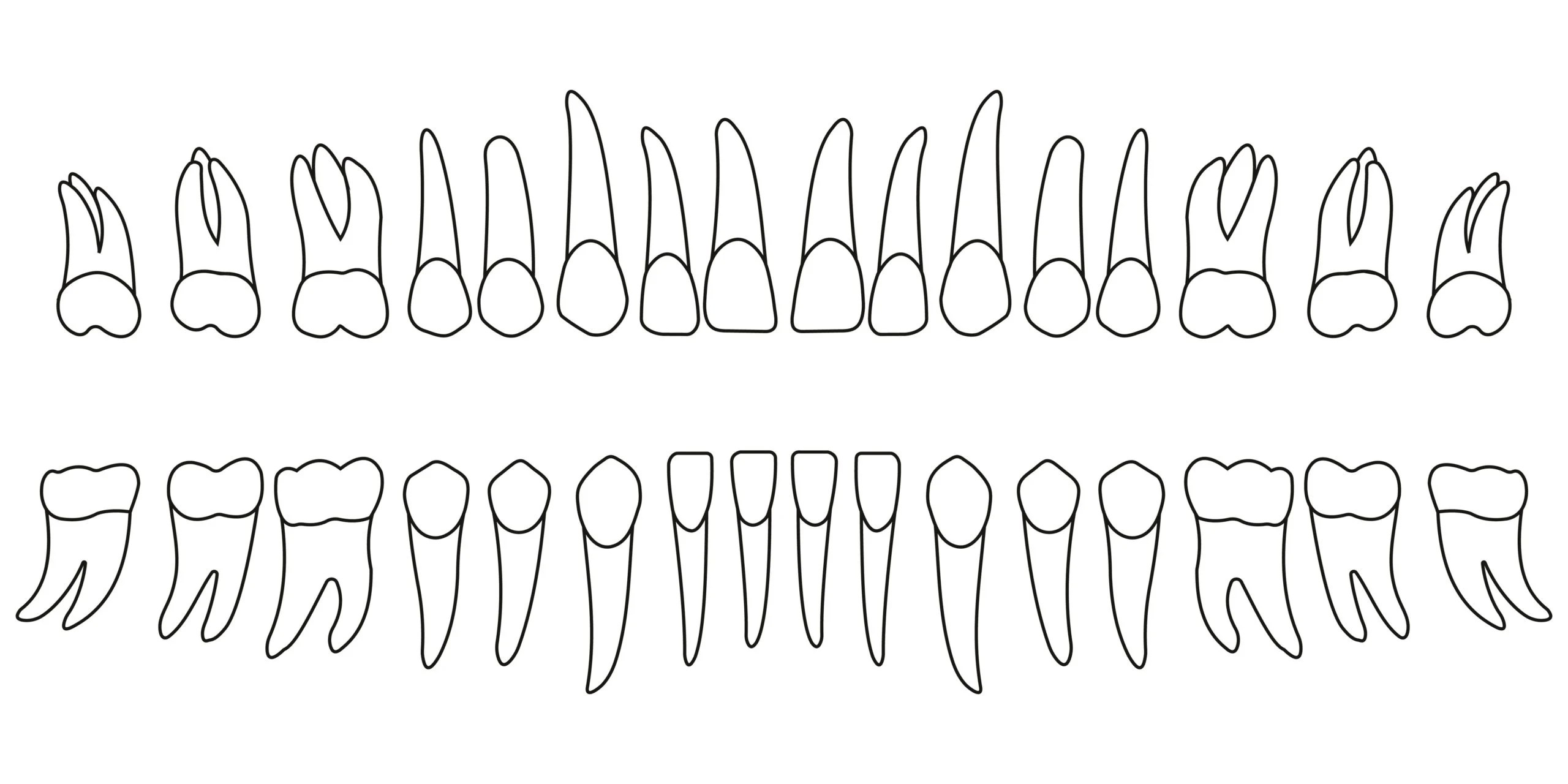 What Is Periodontal Charting?