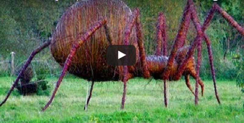 I 14 ragni pi grandi al mondo
