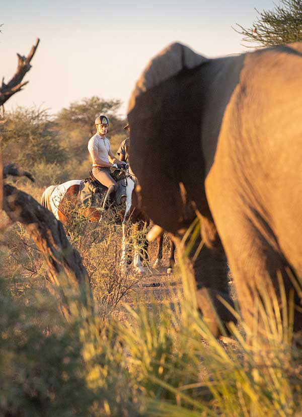 horse riding with elephant