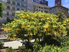 Coolest plant!