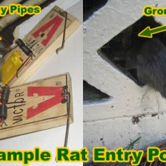Dryer Plug Wiring Diagram How To Set A Formal Table Setting What Can Mice Climb? Walls, Brick, Siding, Concrete