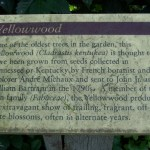 Yellowwood Placard