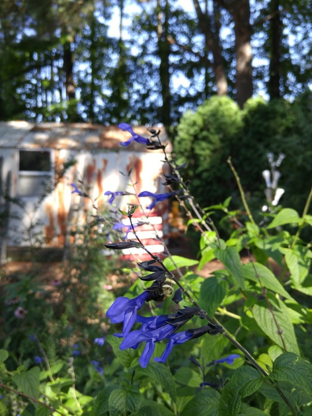 something-blue-at-nursery-near-Chapel-Hill.800-00