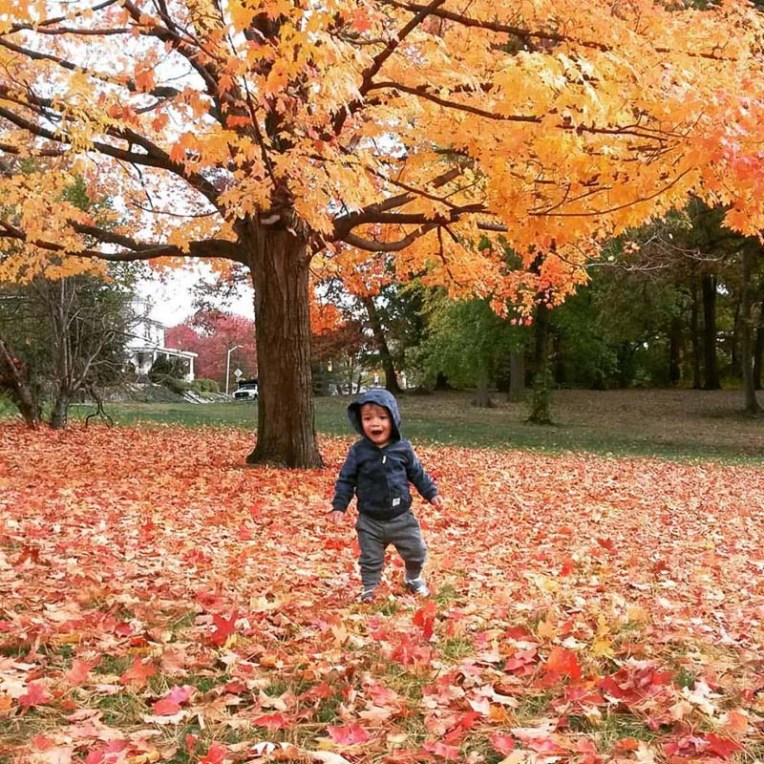20151030-Dylan.Found-some-leaves.Instagram-2