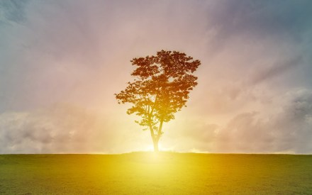 tree with sunlight sky energy efficiency