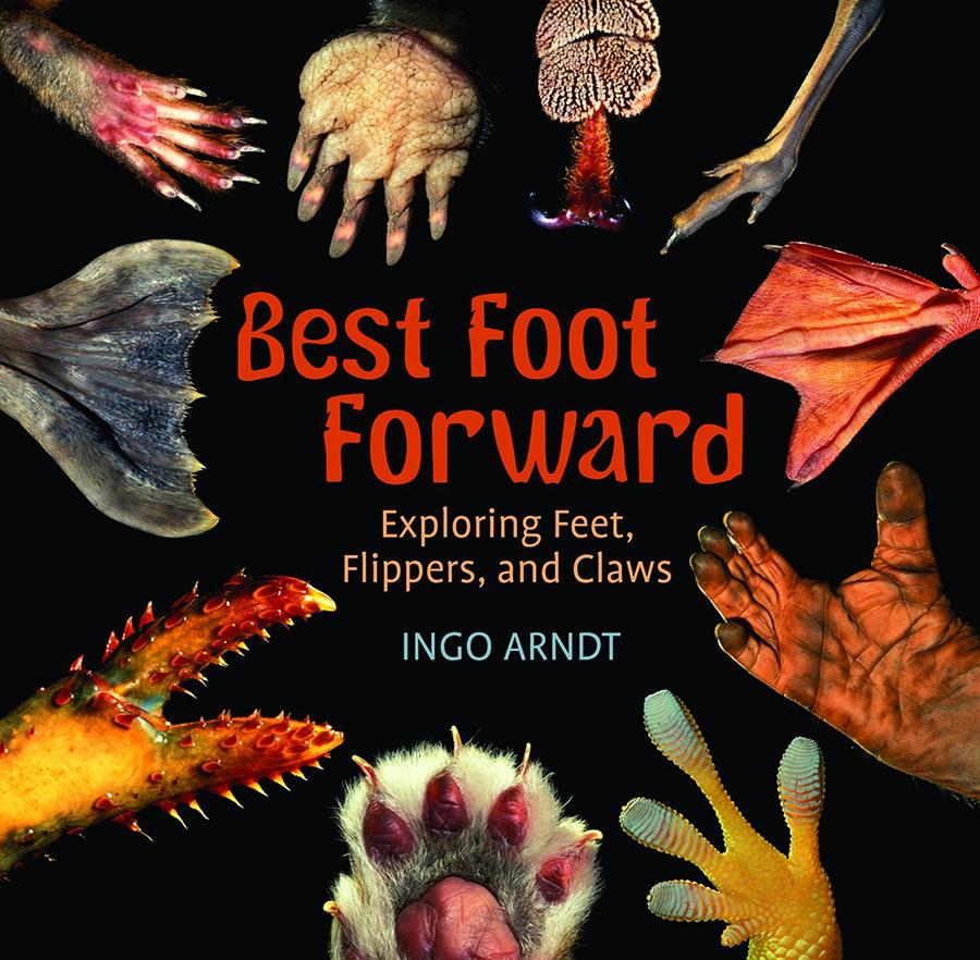 hight resolution of Best Foot Forward: Exploring Feet