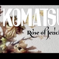 KOMATSU's 4th Album 'Rose Of Jericho' Marks Debut w/Heavy Psych Sounds Records