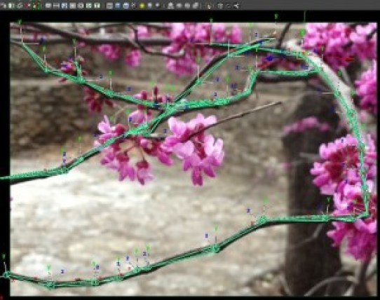 Rig in to Spring, flowering tree here in Austin Texas with joints drawn over it in MAya