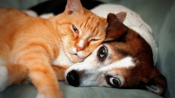 Pets and physical responses to stress