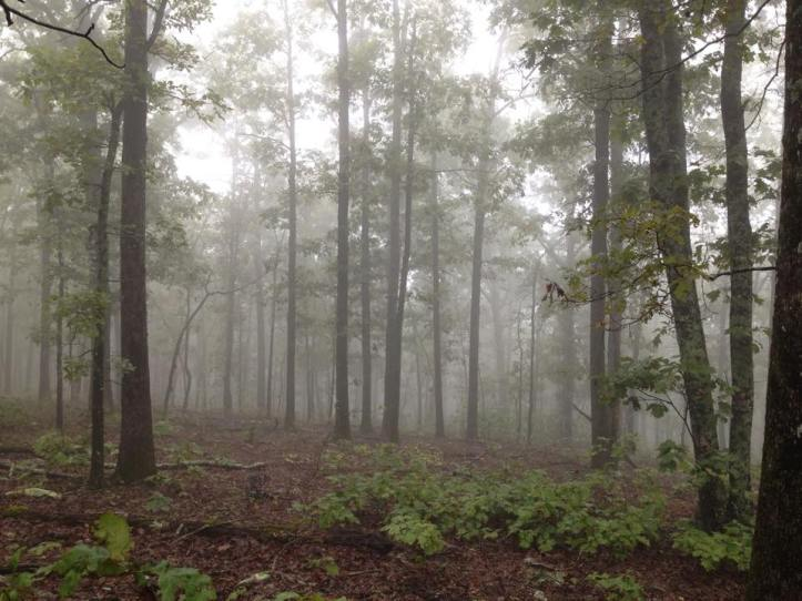 Hot Springs Hikes – Three excellent hikes about an hour's drive from Hot Springs, Ark.