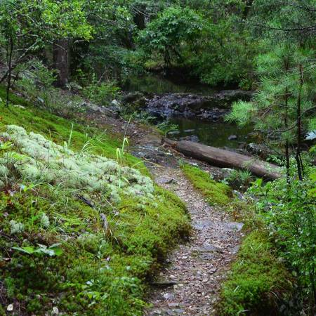 Hike the Dam Mountain Trail at Lake Catherine State Park in Arkansas for a trail that shows you everything.