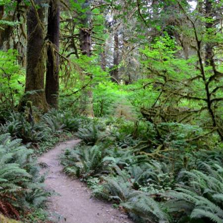 What to do and see if you only 48 hours in Olympic National Park. How to plan your trip to fit in the best of this diverse park has to offer.