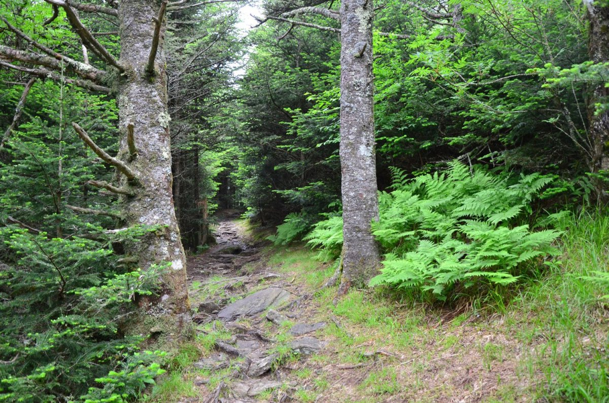 Old Mitchell Trail Loop at Mount Mitchell State Park in North Carolina is a beautiful day hike that shows you the high elevation of the Apalachians.