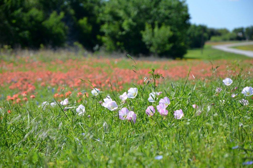 It's not just the Texas Bluebonnets you can spot along the trail
