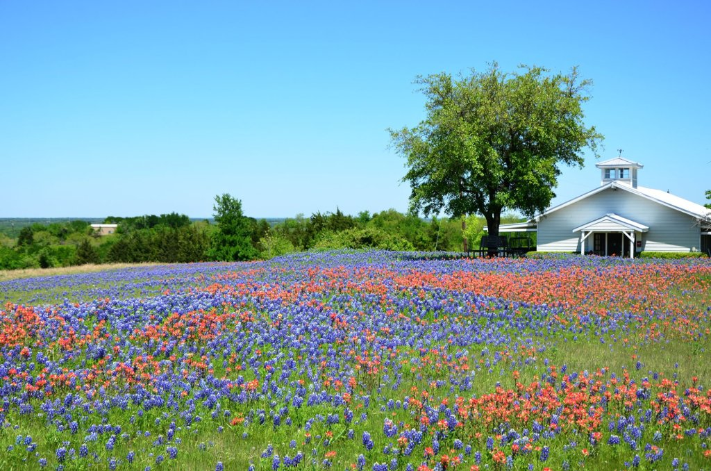 A field of flowers is shown along FM 813