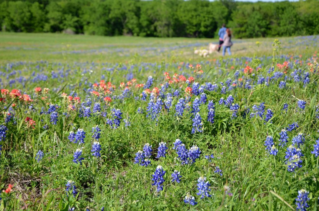 People walk among the flowers at the Meadow View area