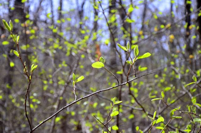 New life breaks out in spring along the extended Lake Sylvia Loop Trail