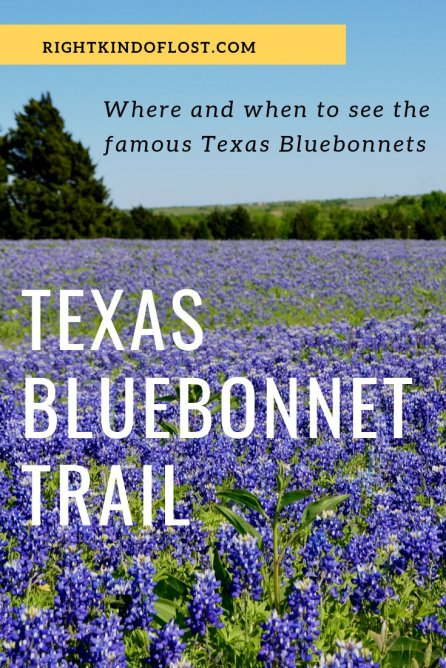 Ennis, Texas, is home to the Texas Bluebonnet Trail, a driving trail that showcases the best of the flowers as well as some other fun and beautiful things.