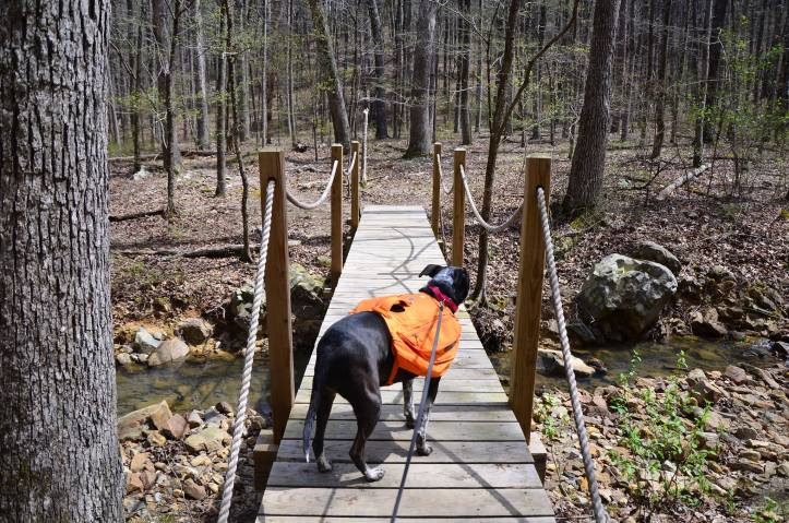 Remember to leash you dog when it is required. This is a good way to practice Leave No Trace Principle 7