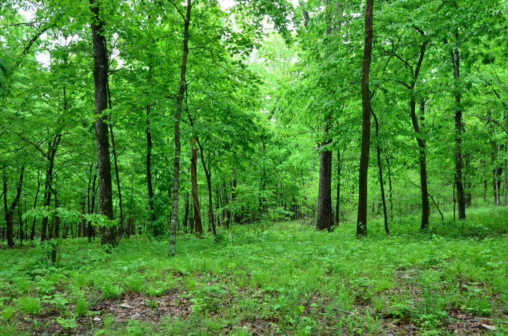 The thick woods are shown on the Goat Trail and Big Bluff