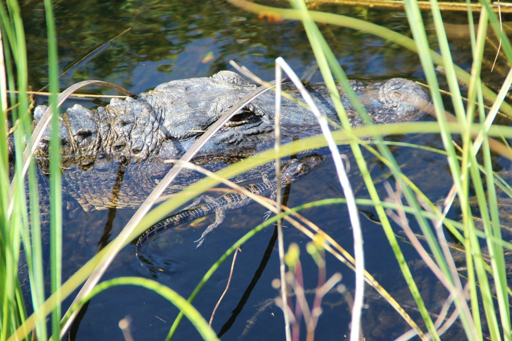Shark Valley Trails Everglades National Park