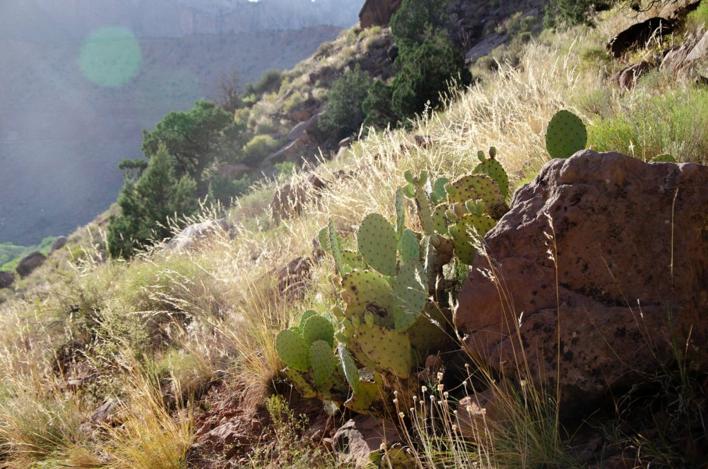 Cactus and desert vegetation is shown