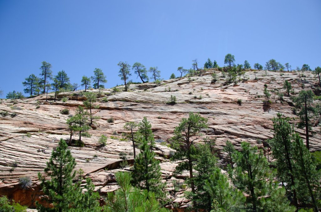 The beauty of Zion National Park is shown