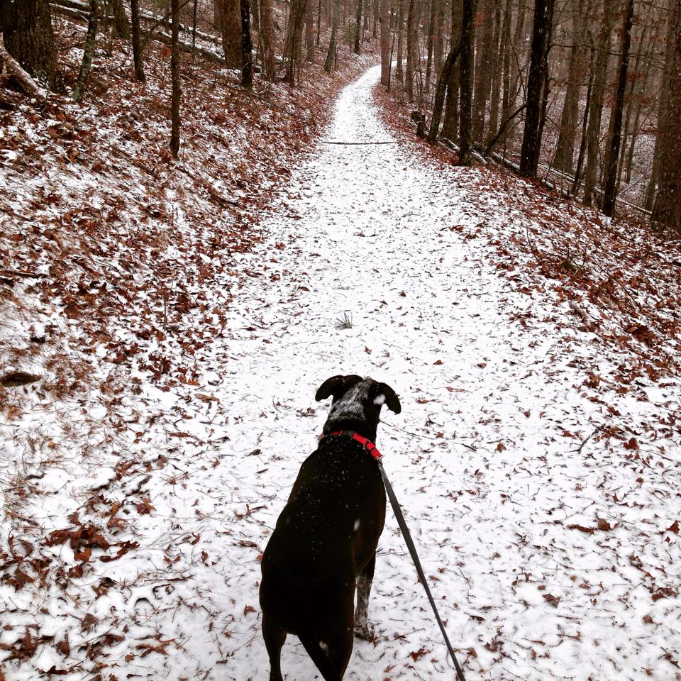Hiking in the snow in Hot Springs National Park is one of the best national parks to visit in winter