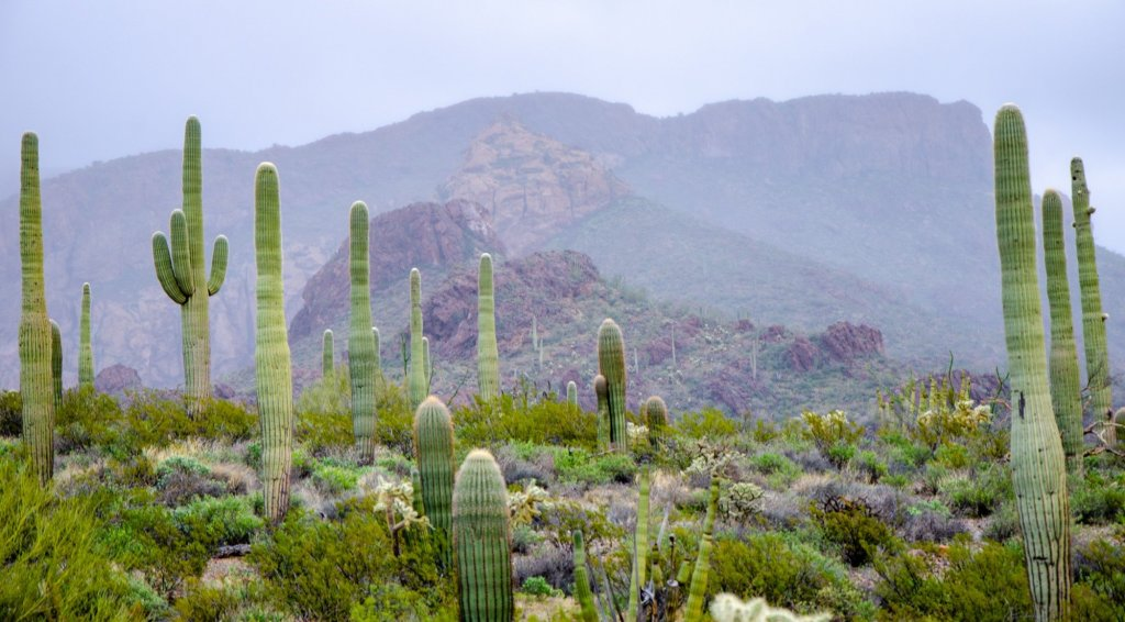 The Ajo Mountains are shown