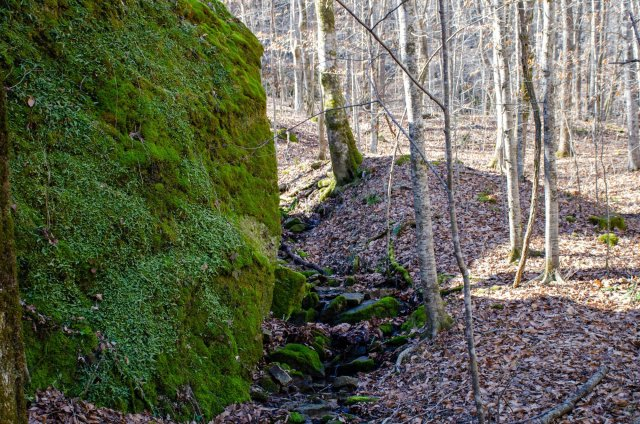 A large boulder is shown at Smith Creek Preserve
