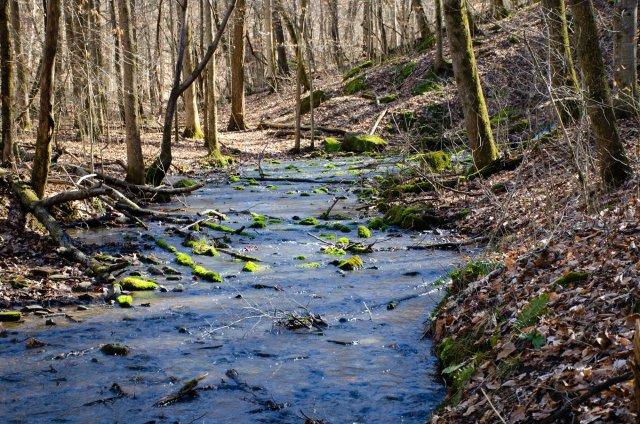 the creek the spring creates
