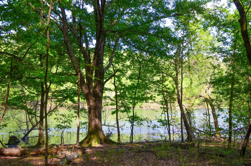 The lake is shown through the trees on the Chickadee Trail