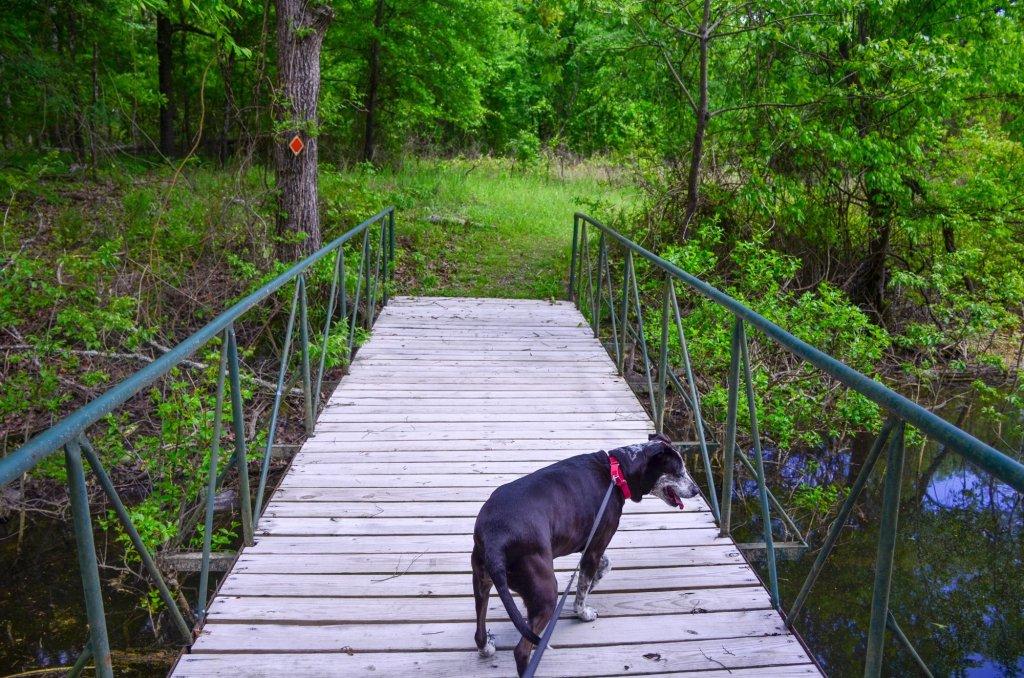 Hiking along the Green Heron Trail at DeGray Lake State Park