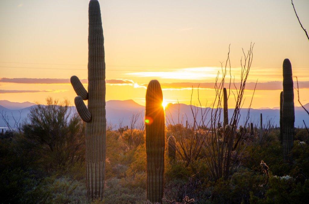 The sun sets behind saguaro cactus