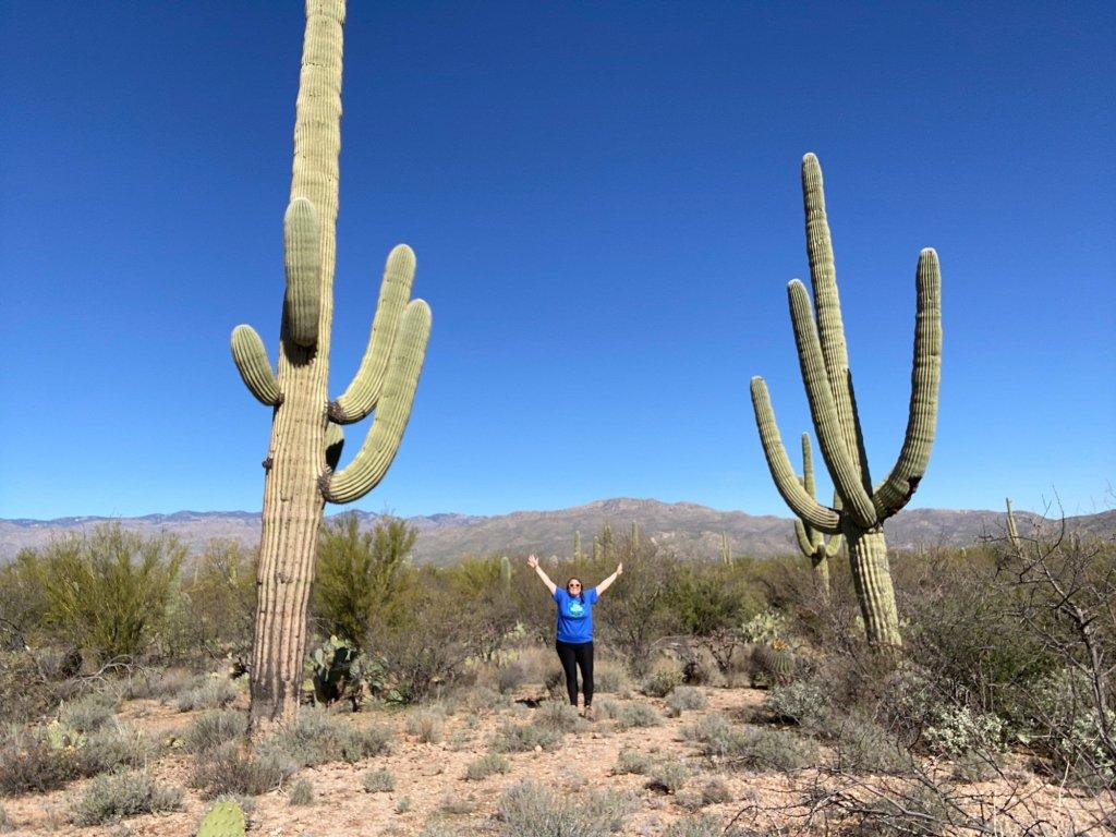 Standing tall among the saguaro cacti at Saguaro National Park