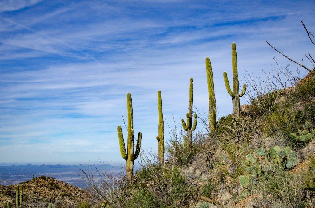 Saguaro National Park is shown