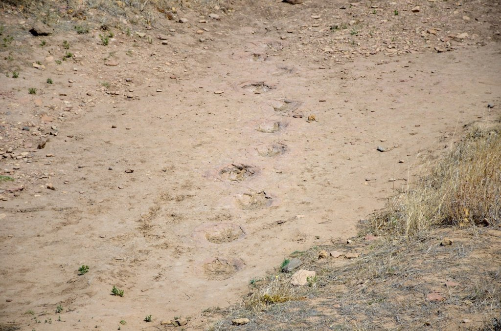Dinosaur footprints are shown