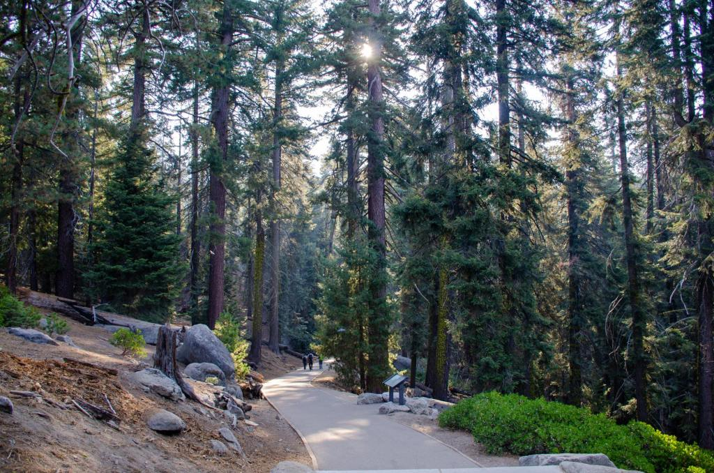 The paved path that leads to General Sherman is shown