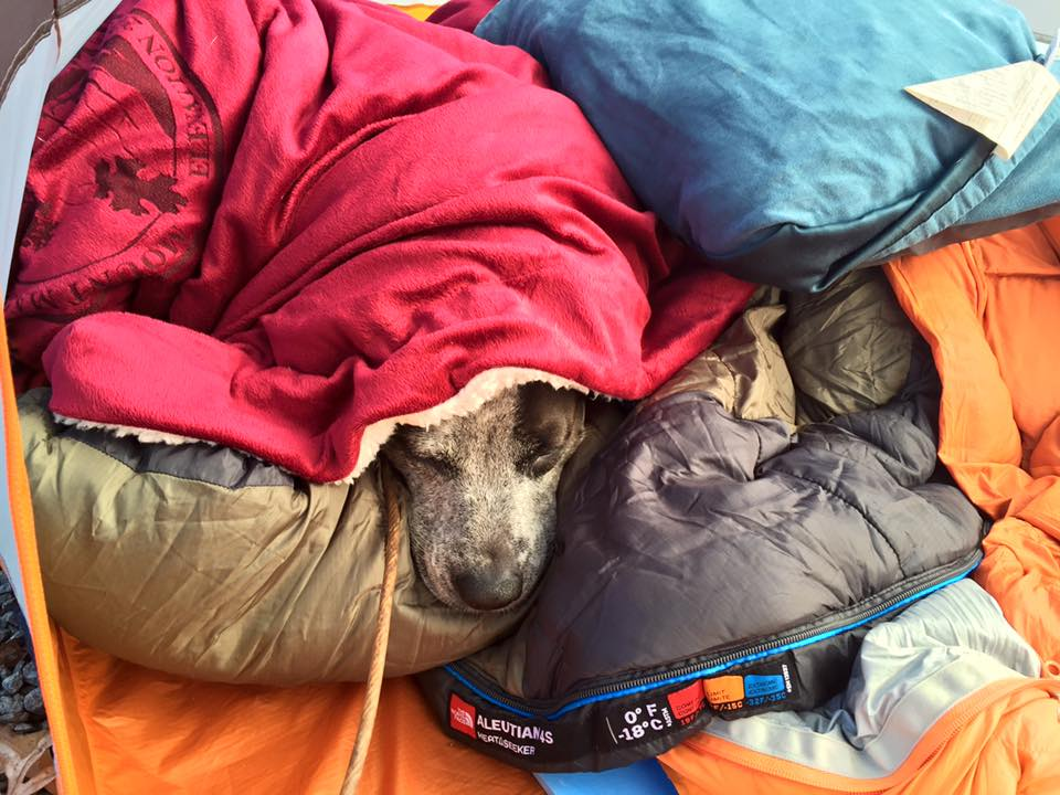 A dog is bundled on a cold weather camping trip