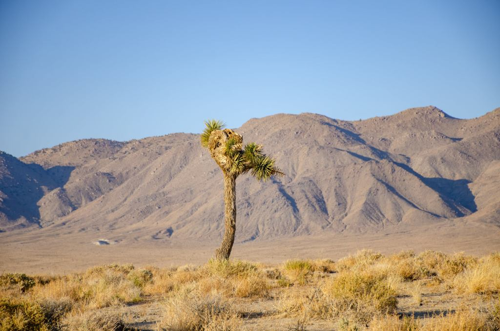 A tree is shown in Death Valley