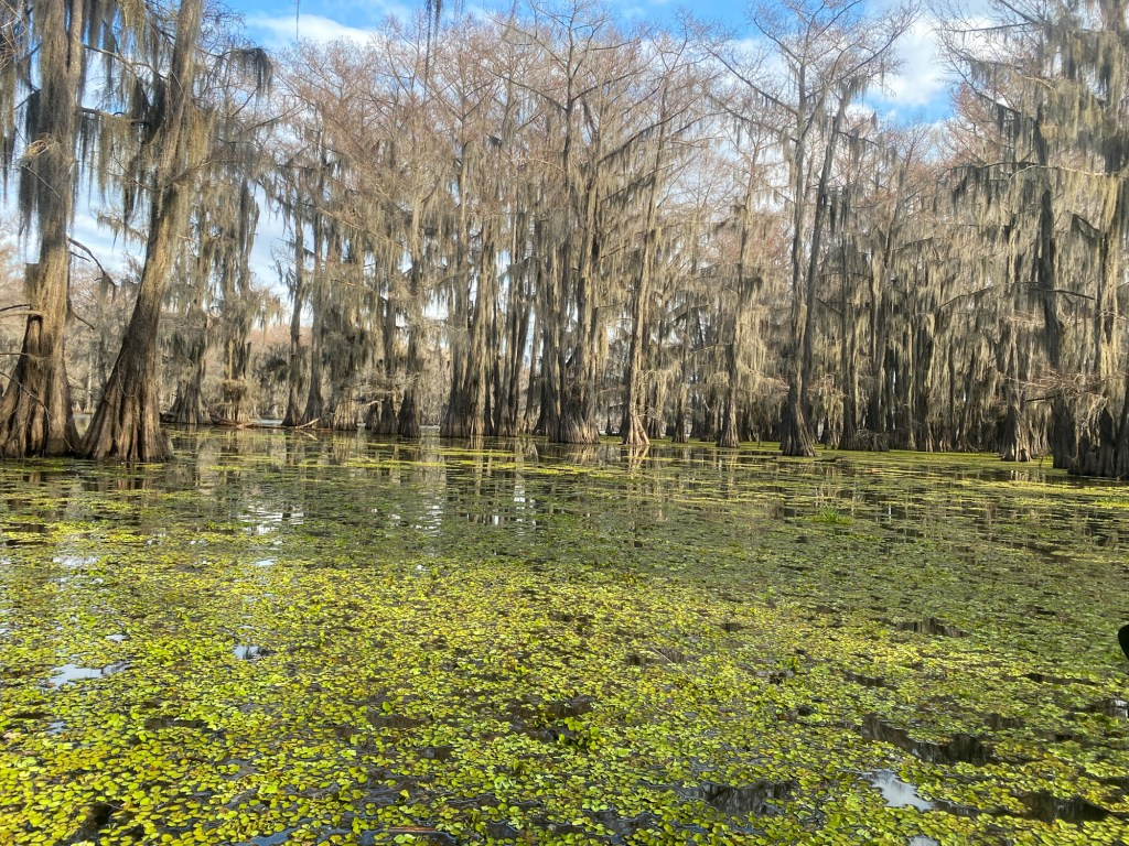 The Hell's Half Acre Paddling Trail at Caddo Lake State Park