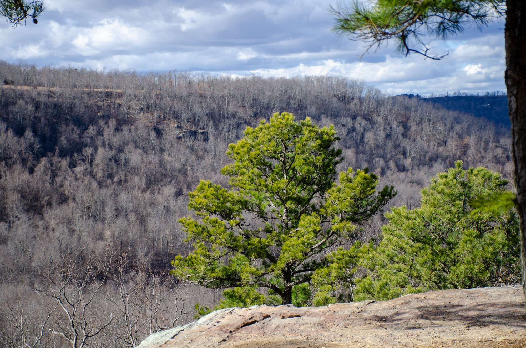 Hideout Hollow Trail shows views of Cecil Creek Valley
