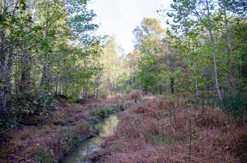 A creek is shown at Village Creek State Park