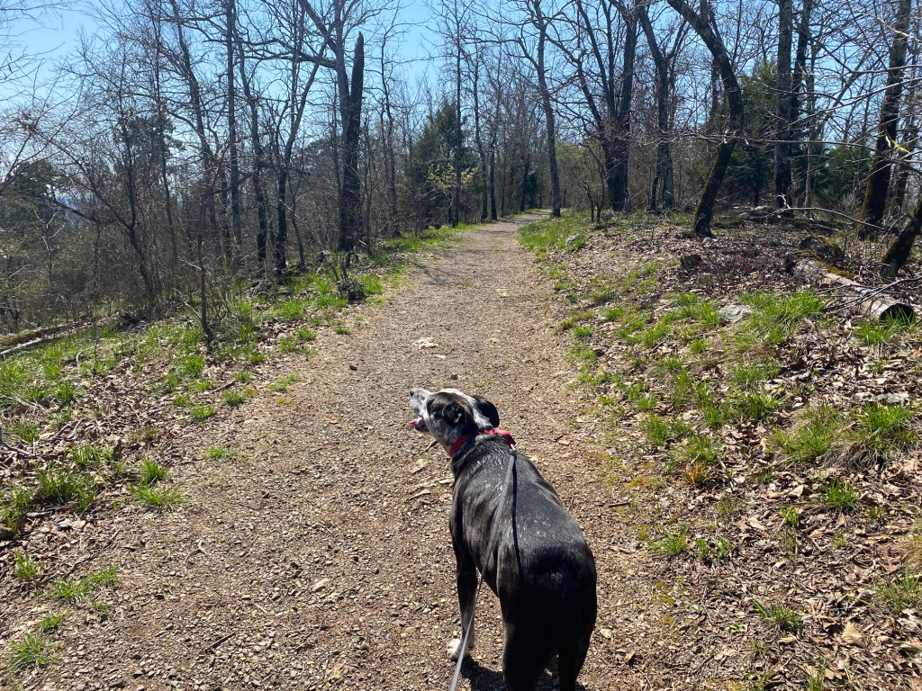 A dog is shown on the Goat Rock Trail