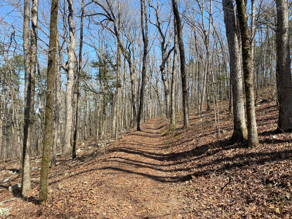 Open woods are shown along the Goat Rock Trail loop