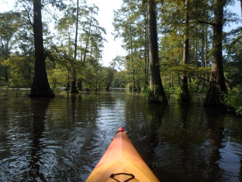 A kayak is shown in the swamps in regulation with arkansas kayak laws