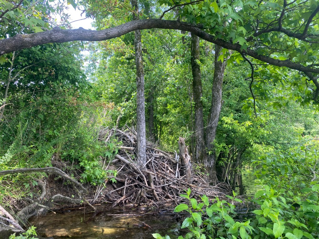 A beaver lodge is shown on the Islets Cove Paddle Trail