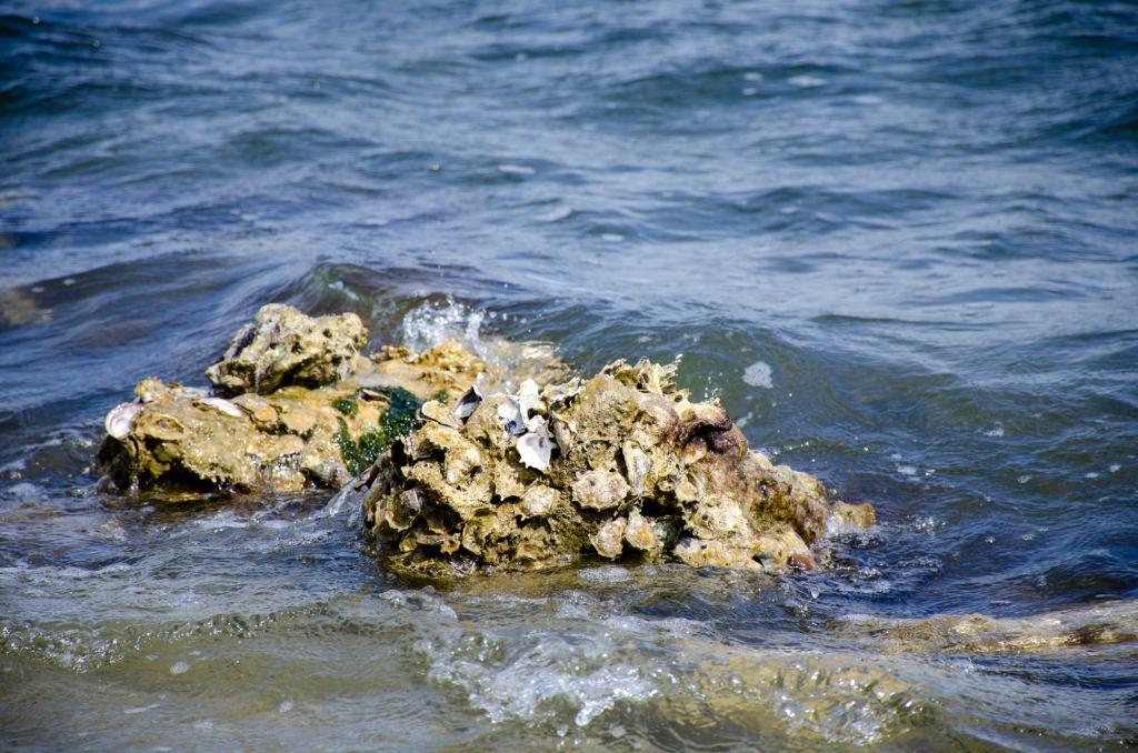 Ocean rocks are show  at Biscayne National Park