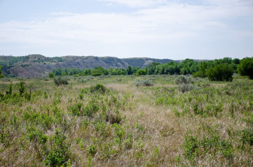 The prairie is shown at the Elkhorn Ranch Unit