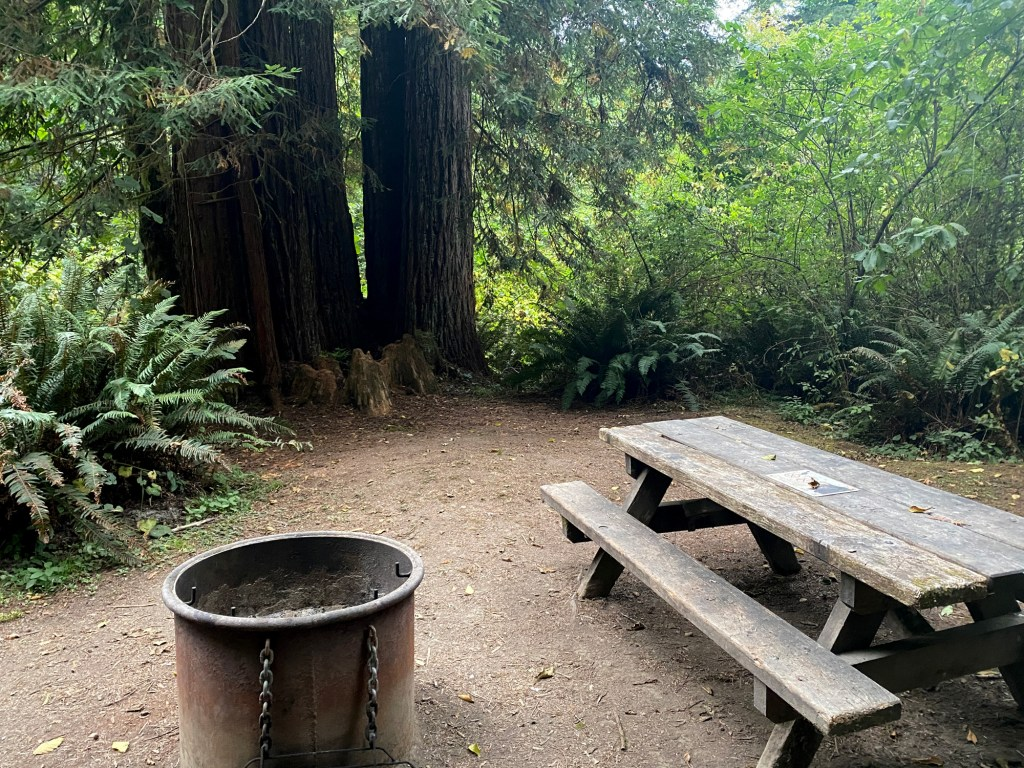 A campsite at Redwood National Park is shown